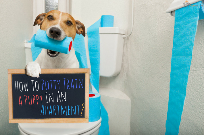 How To Train A Puppy In An Apartment