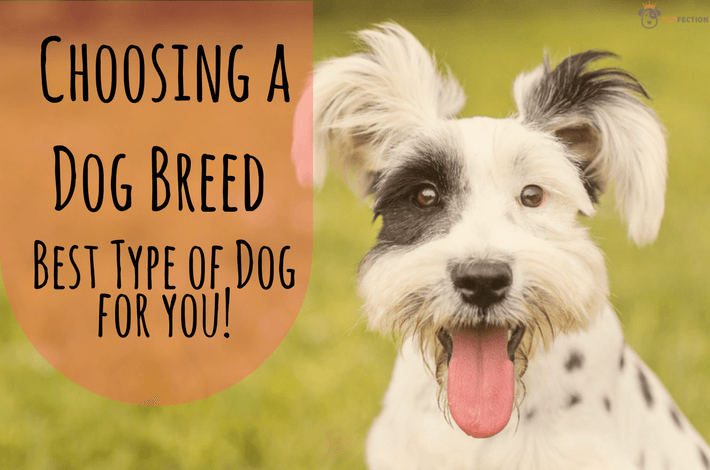 Guide to choosing a dog breed
