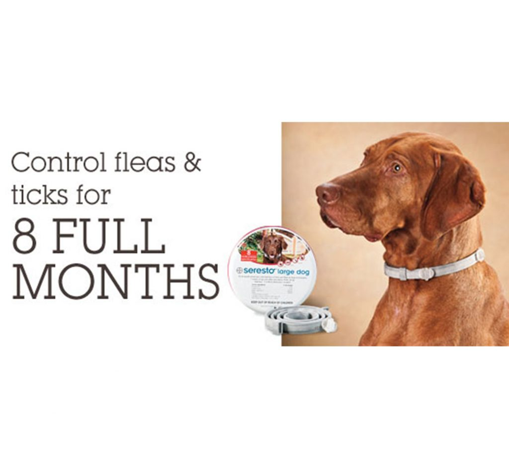 Seresto Flea And Tick Dog Collar And Its Alternatives Pupfection