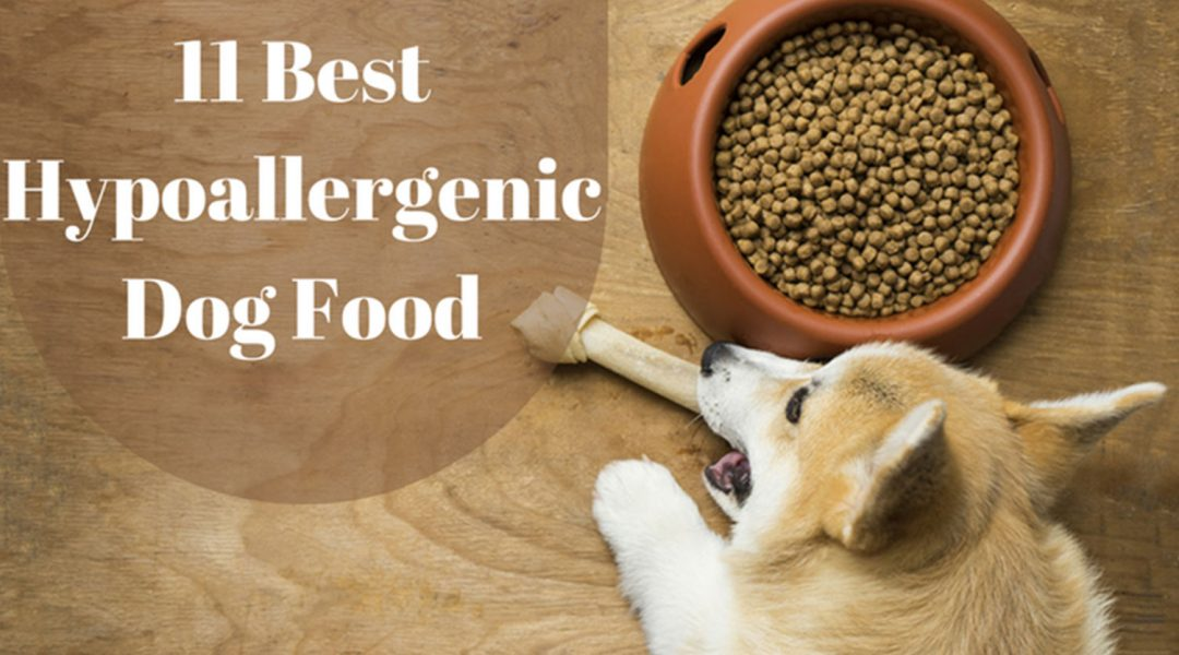 11-Best-Hypoallergenic-Dog-Food