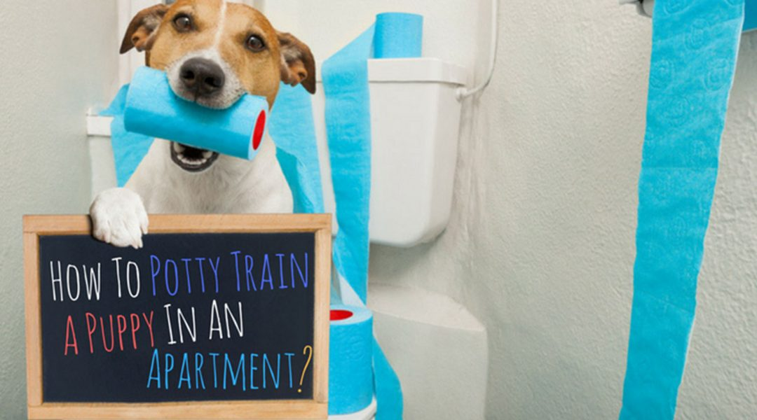 How-To-Train-A-Puppy-In-An-Apartment