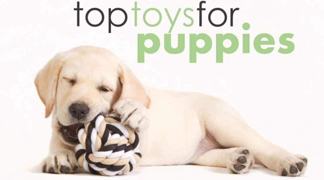 best-chew-toys-for-teething-puppies-review