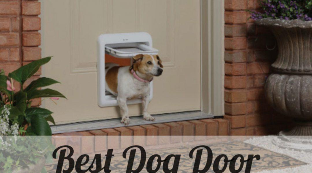 best-dog-doors-review-2019