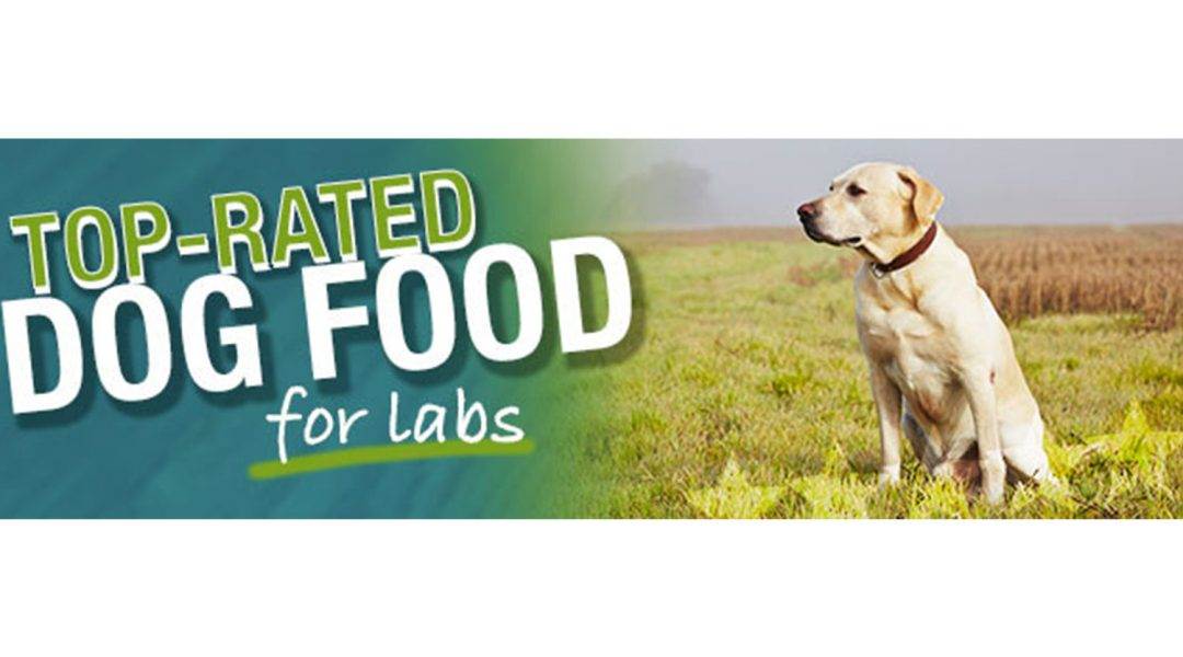 best-dog-food-for-labrador-puppies-review