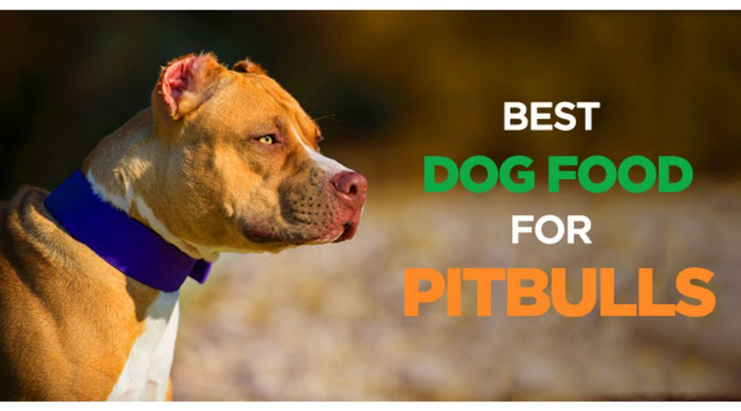 best-dry-dog-foods-for-pitbull-puppies