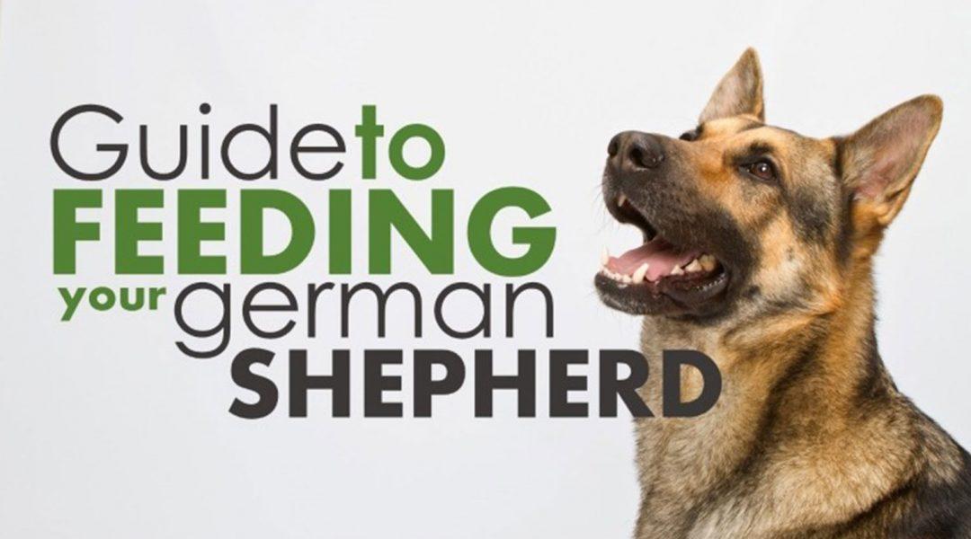 best-dry-dog-foods-review-for-german-shepherd-puppies