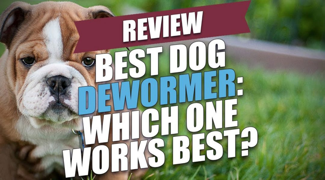 best-puppy-and-dog-dewormers-review