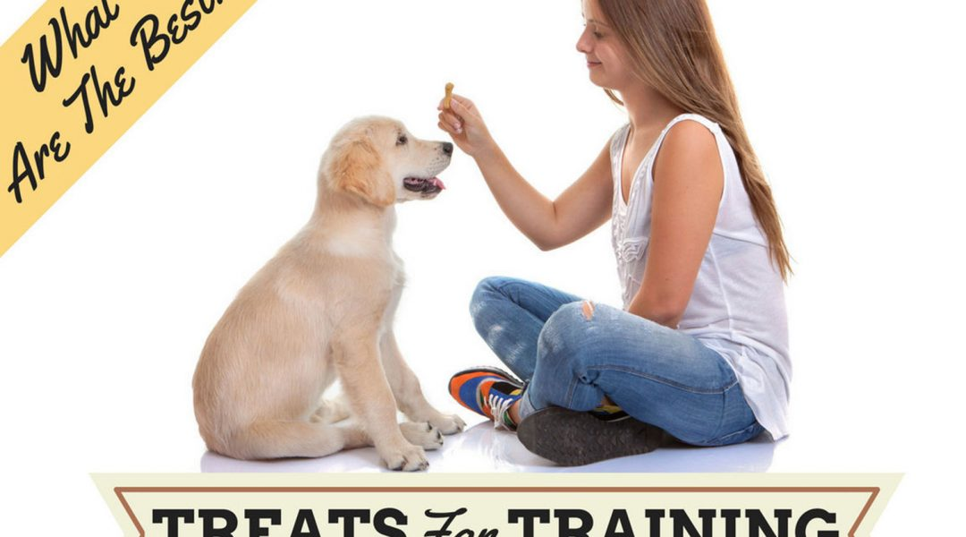 best-training-treats-for-puppies-review