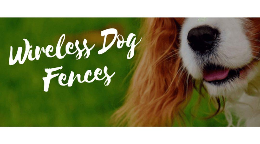 best-wireless-dog-fences-review