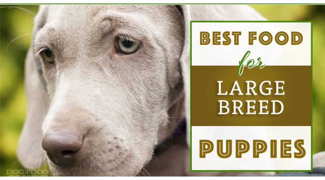 large-breed-puppy-dog-dry-food-reviews-e1542707316386