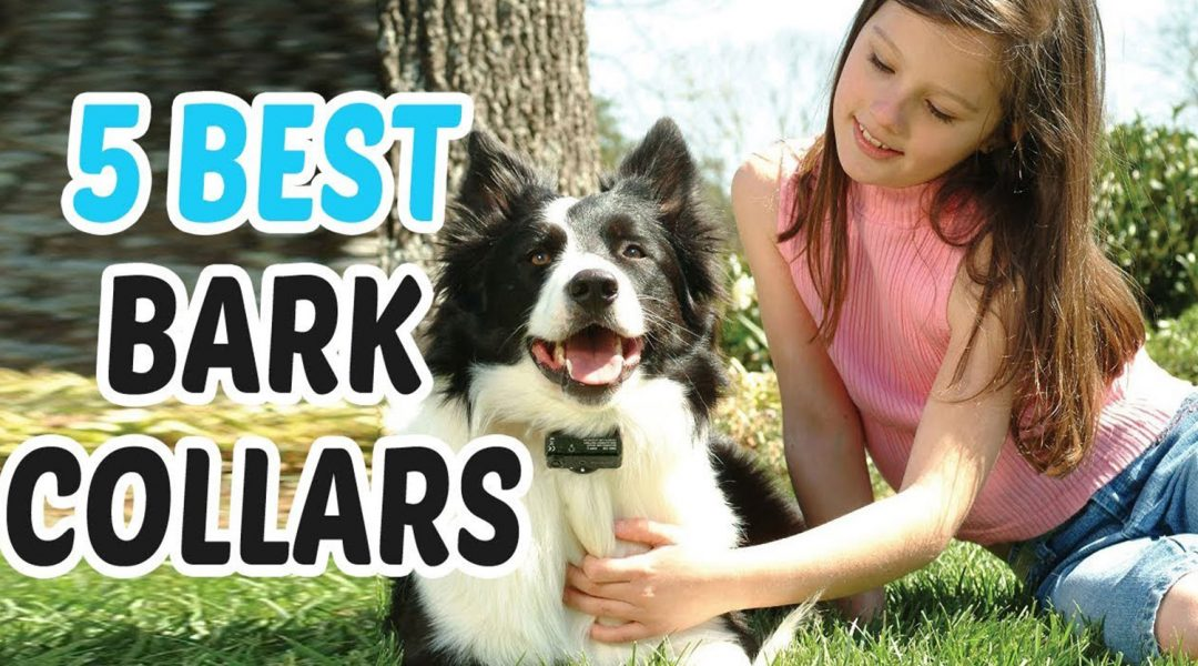 top-5-best-bark-collar-for-dogs-review