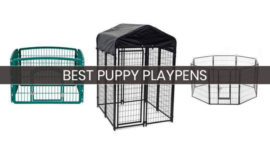 top-5-puppy-playpen-reviews