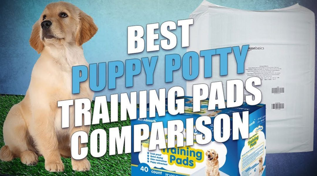 vbest-puppy-pee-and-potty-pads-for-training-reviews